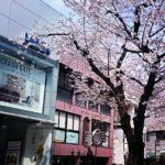 【プリンセス性を上げるお花見会】今週末!