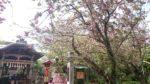 江ノ島にお呼ばれ/春のプリンセスセッション会〆切間近